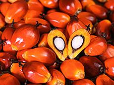 Frutto della Palma da Olio