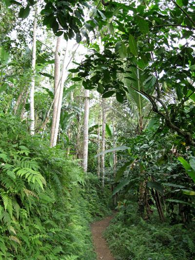 foresta bali