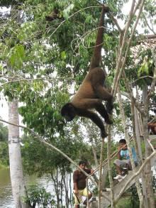 Scimmia, Iquitos, Amazzonia