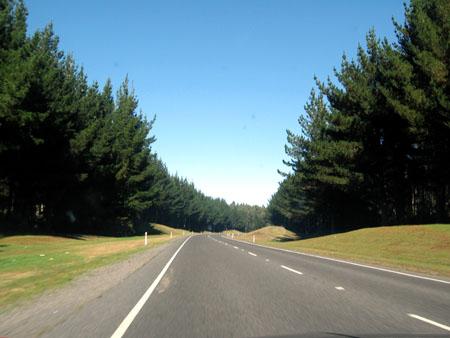 Boschi in Nuova Zelanda